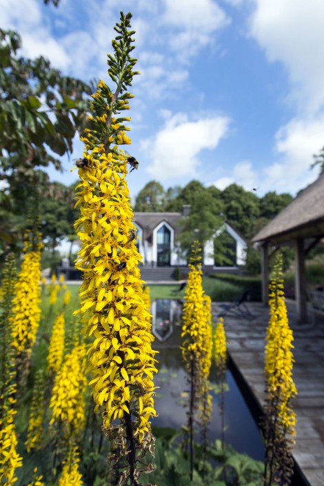 Kleurijke tuin