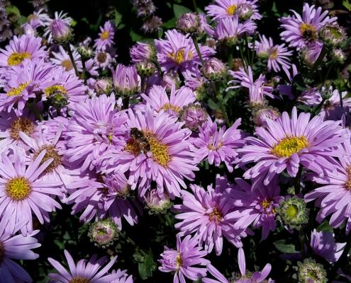 bijen Oosterhout